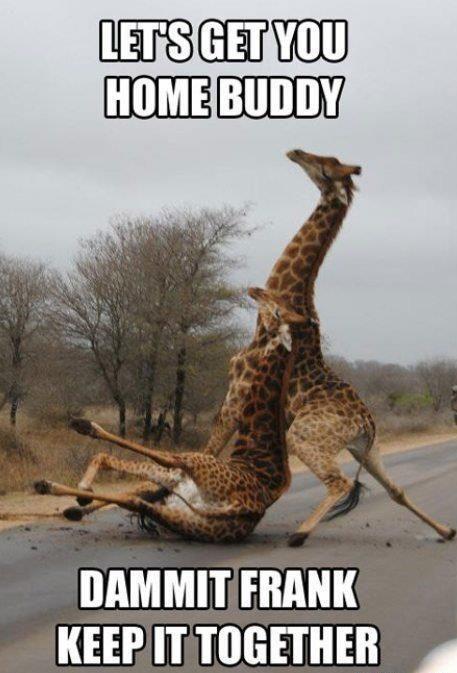 Drunk Giraffes.jpg